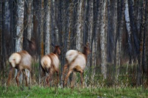 Drivers Urged to Remain Cautious Despite Drops in Deer Crashes